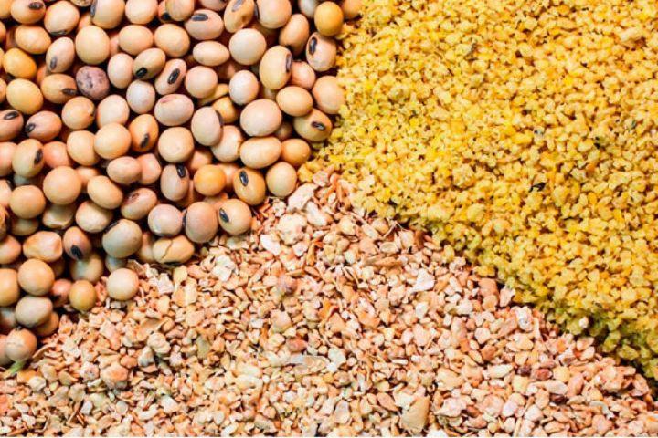 معمای تخصیص ارز دولتی به تولیدکنندگان دام/افزایش شدید قیمت گوشت داخلی با وجود افزایش واردات نهاده