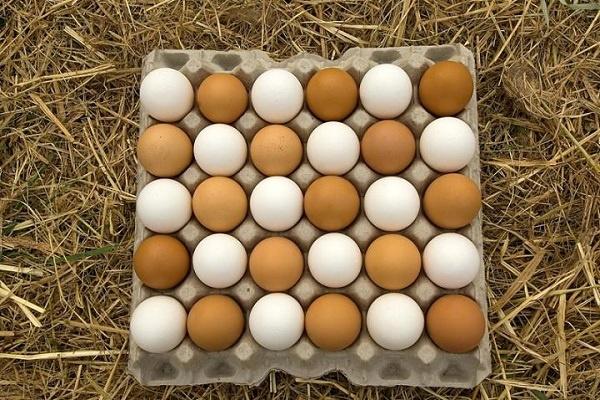 آزاد شدن صادرات تخم مرغ