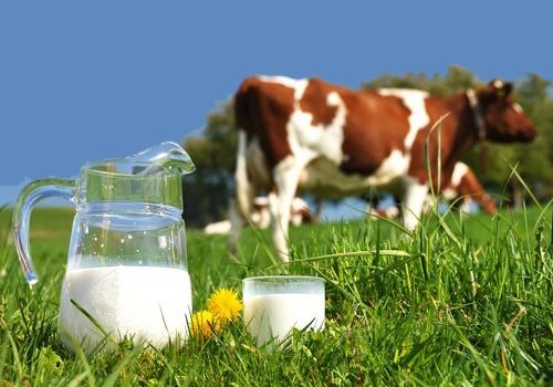 سازمان حمایت قیمت جدید شیرخام را اعلام کرد/ نرخ ۲۳۹۰ تومان روی میز تنظیم بازار