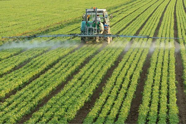 بحث خرید تضمینی، مسیله مهم کشاورزان/ بورس کالا سیاستهای تشویقی برای حضور بخش کشاورزی را فراهم کند
