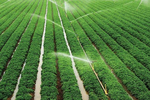 تشکیل صندوق محصولات کشاورزی در بورس کالا