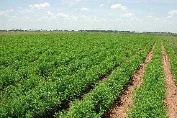 راهاندازی صندوقهای کالایی برای محصولات کشاورزی و فلزات گرانبها/ سرمایهگذاران به جای پرداخت هزینه، از انها بهرهمند شوند