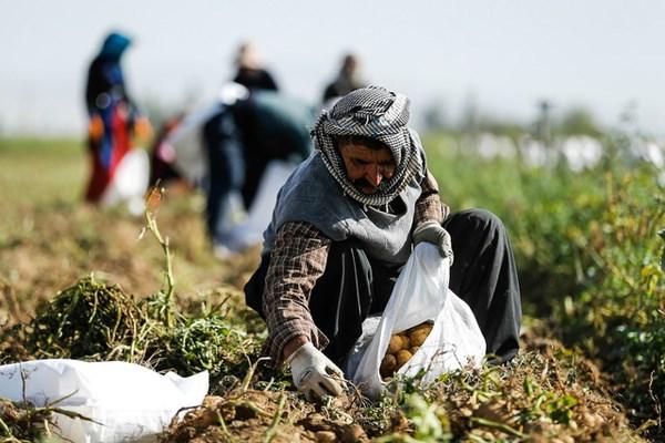 هزار میلیارد تومان تسهیلات برای اشتغال روستایی پرداخت میشود