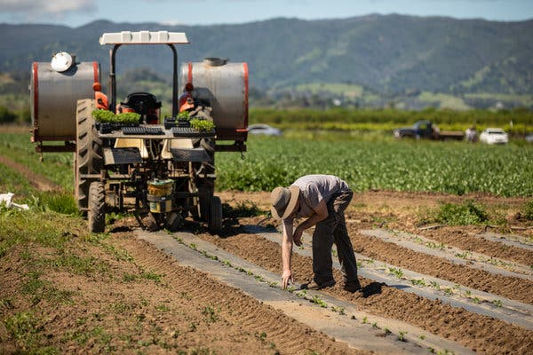 جنگ تجاری ترامپ با چین، داد کشاورزان امریکایی را در اورد