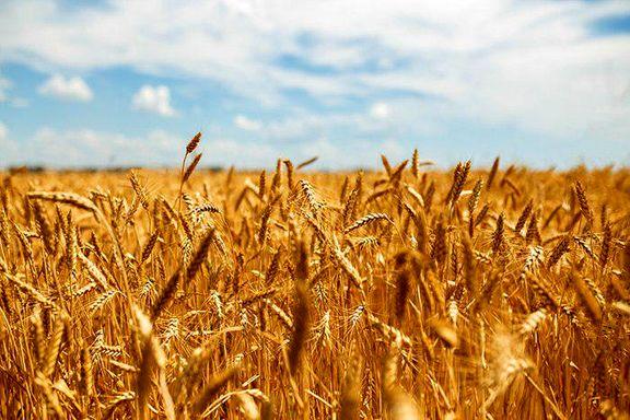 قیمت پیشنهادی گندم برای سال زراعی جدید 2868 تومان اعلام شد