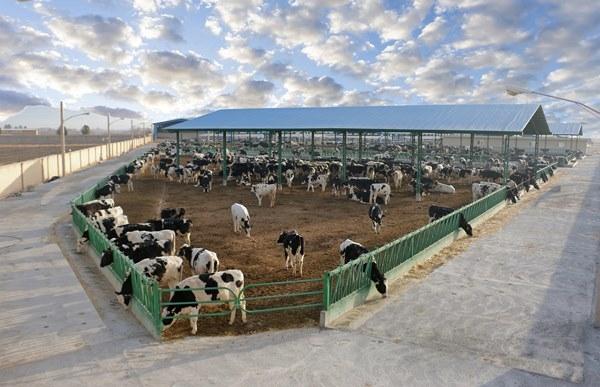 سودآورترین شرکت گروه زراعت در انتظار سود 50 میلیارد تومانی