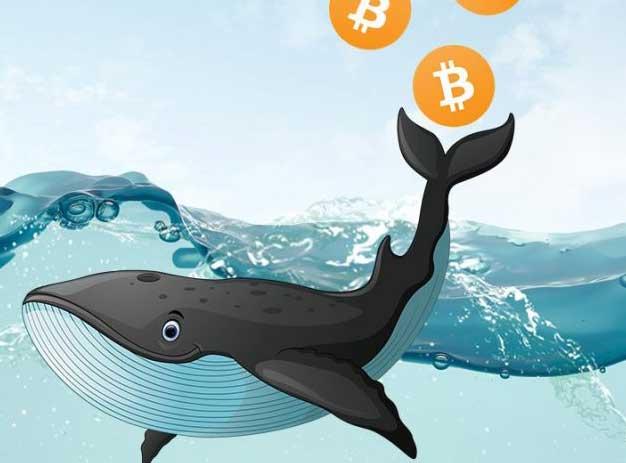 اقدام جدید نهنگ بیت کوین؛ انتقال بیت کوین به ارزش ۹۰۰ میلیون دلار!